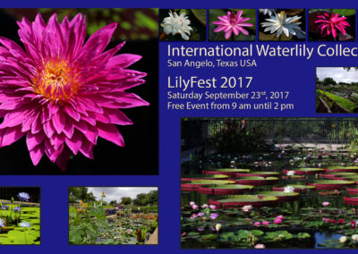 LilyFest 2017 News & Updates