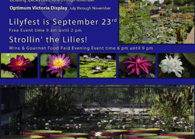 LilyFest 2016 News & Updates