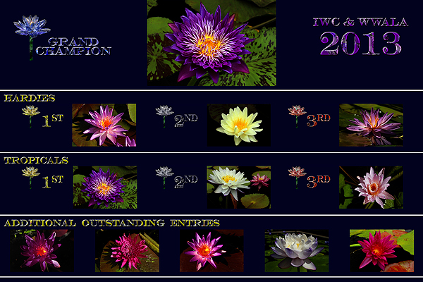 The 2013 2nd Annual WWALA & IWC  New Waterlily Contest Winners