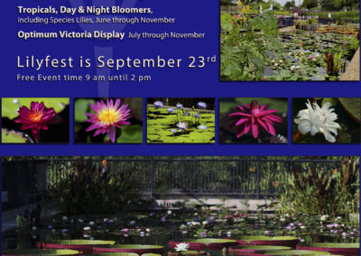 IWC LilyFest Banners & Posters Through the Years